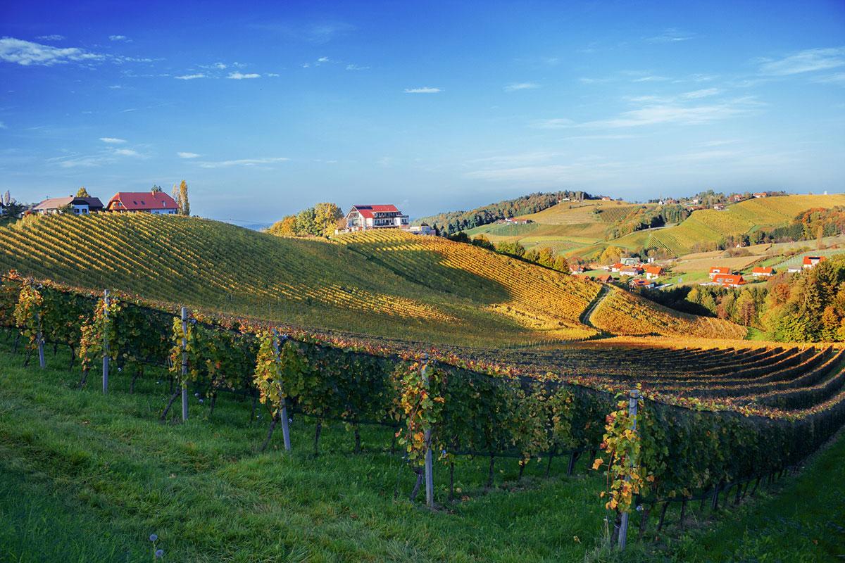 Weingegend Südsteiermark